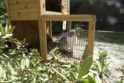 rabbit-hutch1